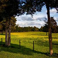Photograph of pastoral meadow on a farm in Alabama.