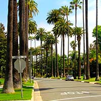 Photograph of Los Angeles street, empty, lined with palm trees.